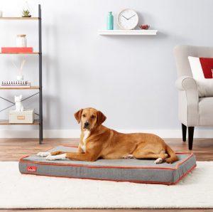dog on Brindle waterproof memory foam bed