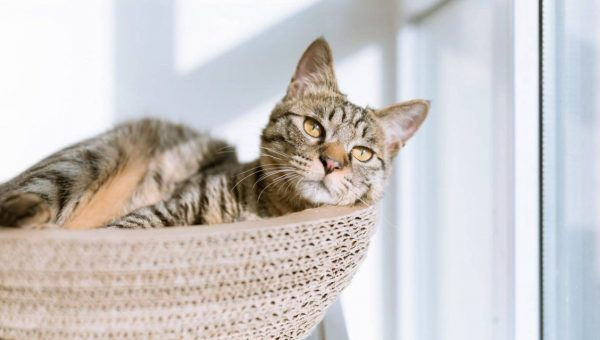 An adult cat lounging on a cat tree in sunlight