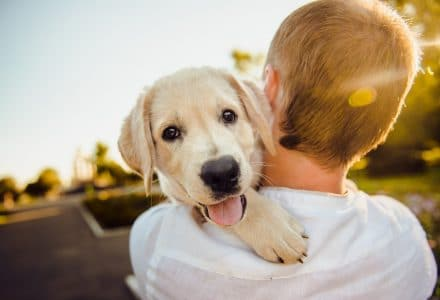 Taking Care of Your Client's Home | The Dog People by Rover com