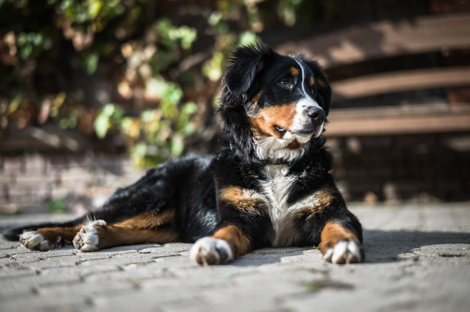 https://www.rover.com/blog/best-dog-foods-for-bernese-mountain-dogs/