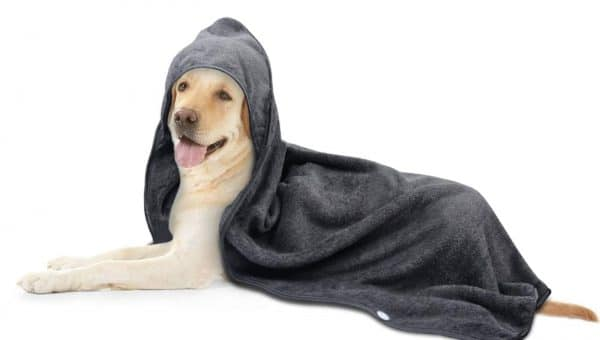 Top 10 Best Dog Towels for Wet Fur and Muddy Paws