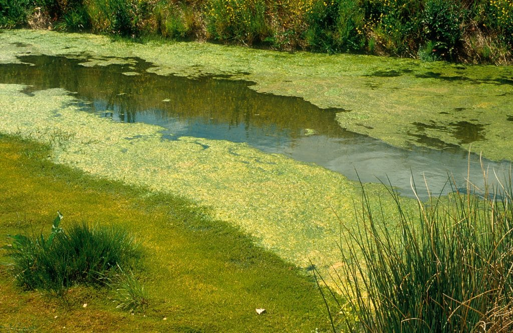 algae toxic to dogs can lurk in drainage ditches like this one