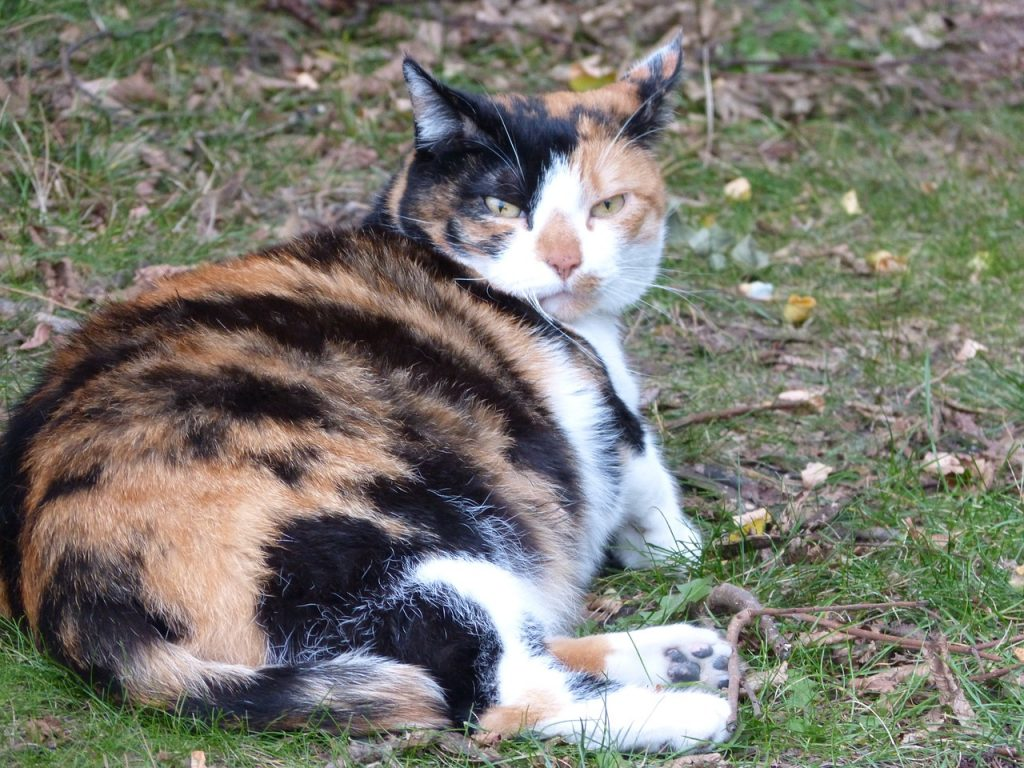 How Long Are Cats Pregnant What You Should Know About Queens
