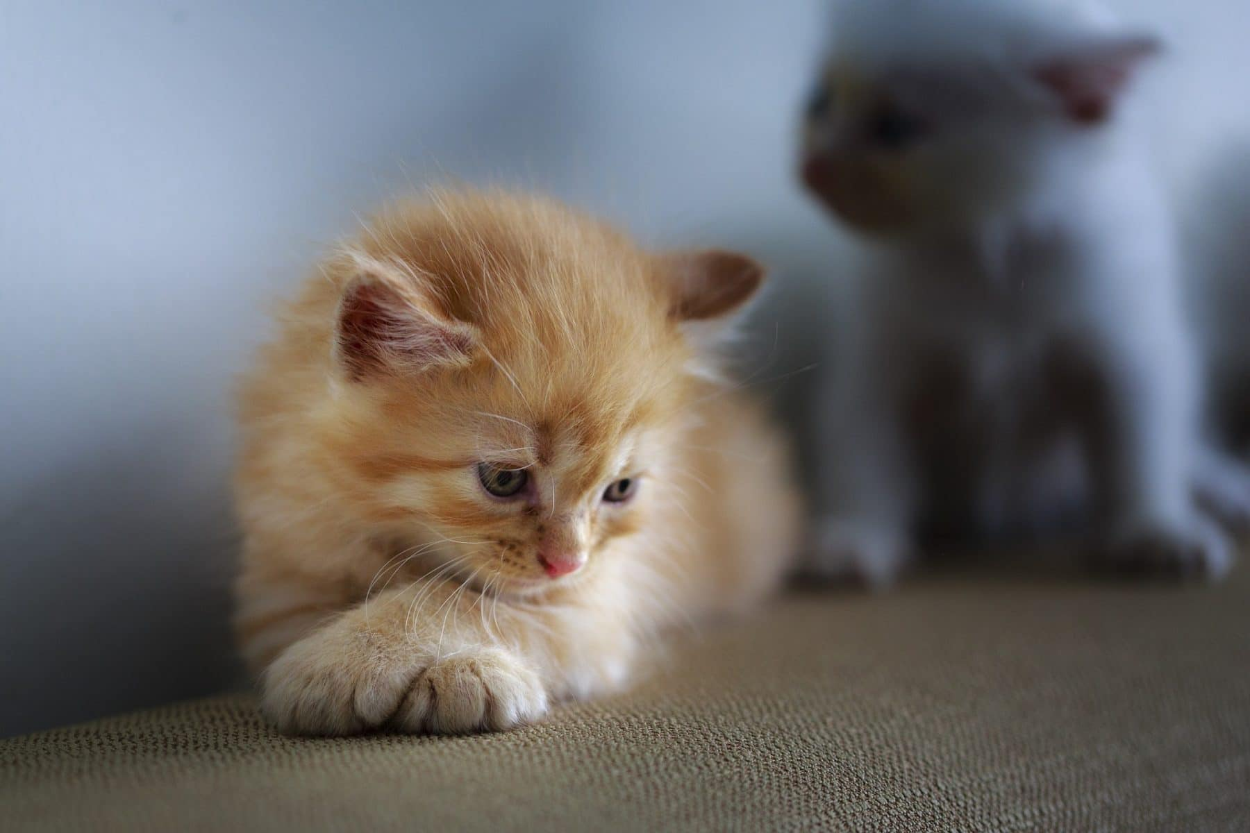 Roundworms In Cats Are No Joke Here S What You Need To Know