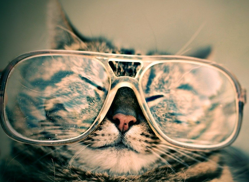 cat wearing human-sized glasses