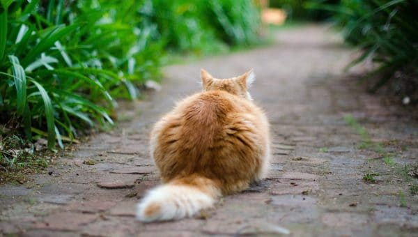 Here's What Your Cat's Tail Behavior Really Means