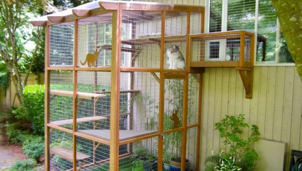 How to Buy or Make Your Own Catio