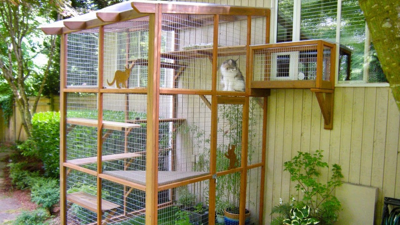 Catios How To Buy Or Make Your Own Outdoor Cat Enclosure