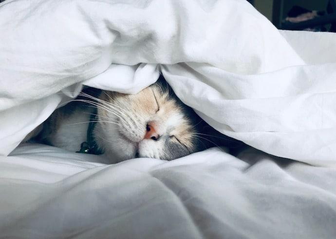 chat qui dort dans le lit