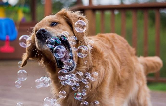 glad hund i parken som leker med bubblor