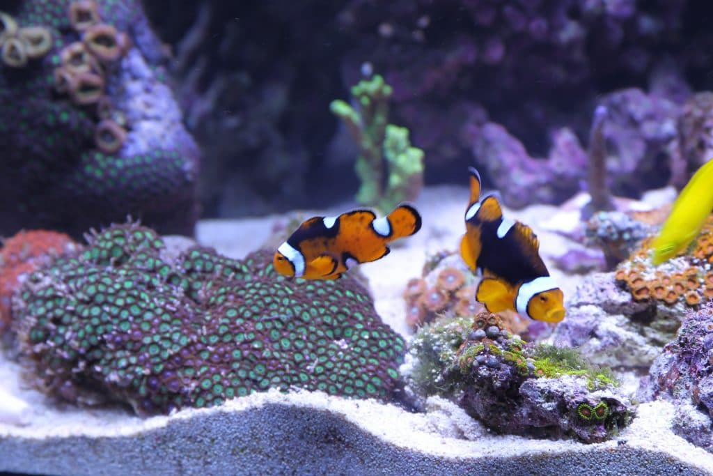 orange fish names for goldfish or clownfish like these include nemo and goldie