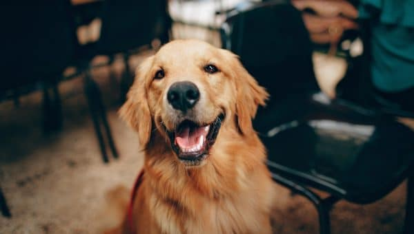 Sju förvånande sätt hunden visar kärlek på