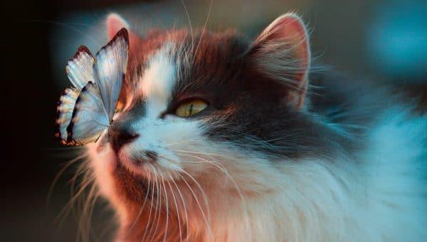 150+ Best Disney Cat Names