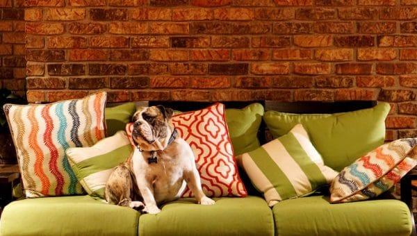 Je hond zindelijk maken: zo doe je dat (met een bel!)