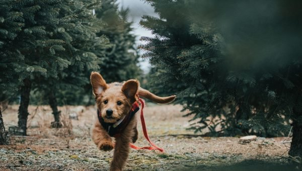 dog running with leash behind