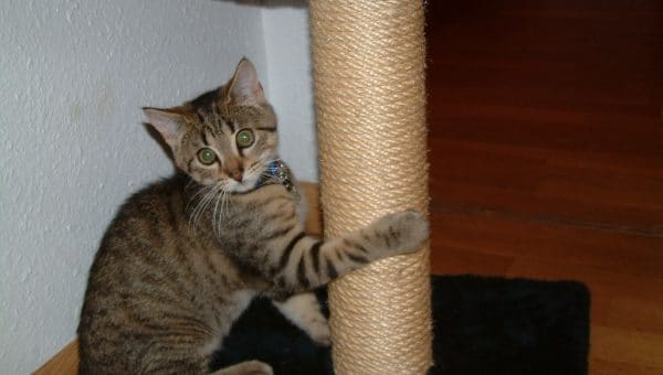 21 Cat Scratching Posts to Keep Your Kitties Off Your Furniture