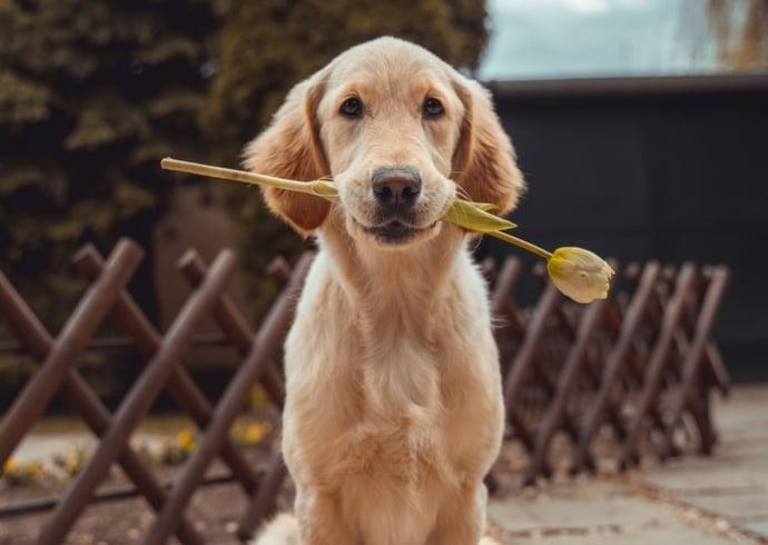 I cani hanno sentimenti