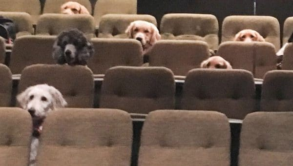 Service Dogs Attend Theatre Performance and It's Basically the Cutest Thing You'll See Today