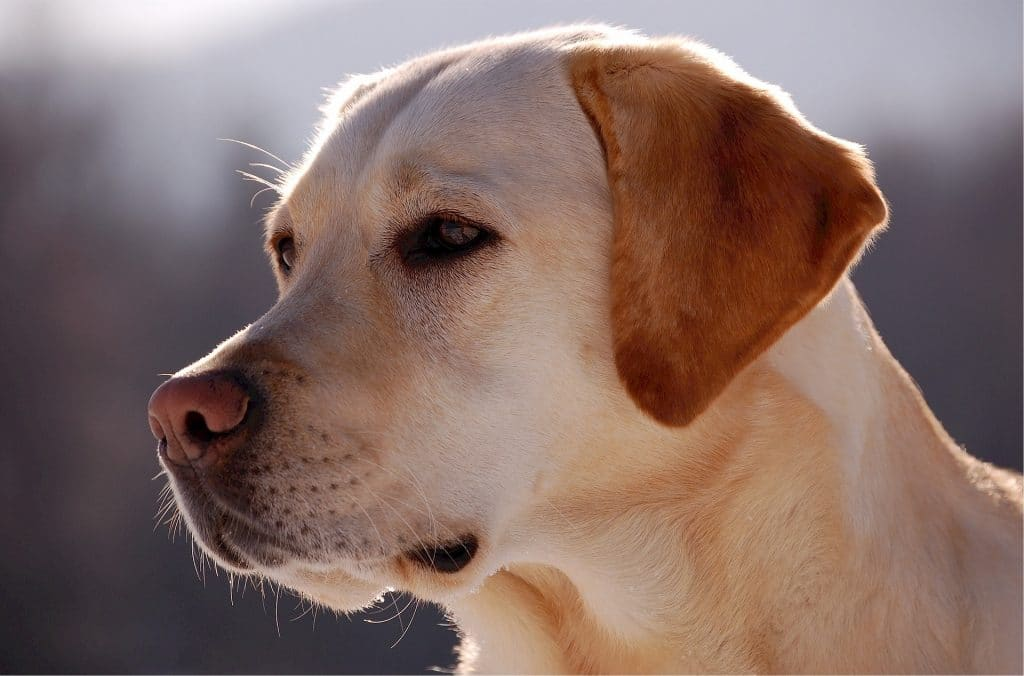 Country Dog Names The Top Country Dog Names Of 2020