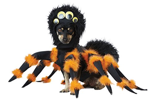 California Costumes spider dog outfit