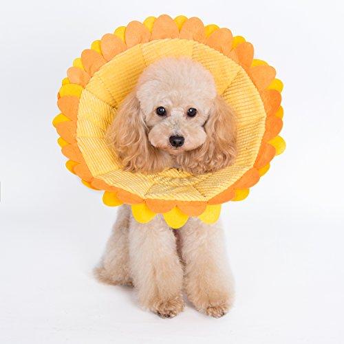 sunflower recovery collar