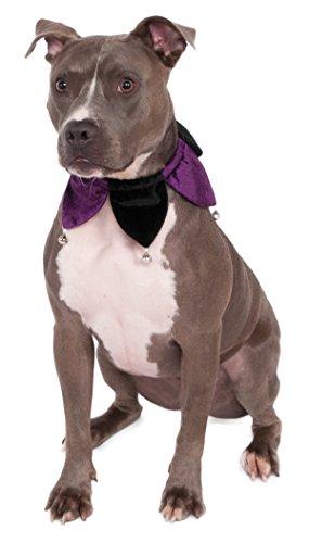 dog wearing jester collar