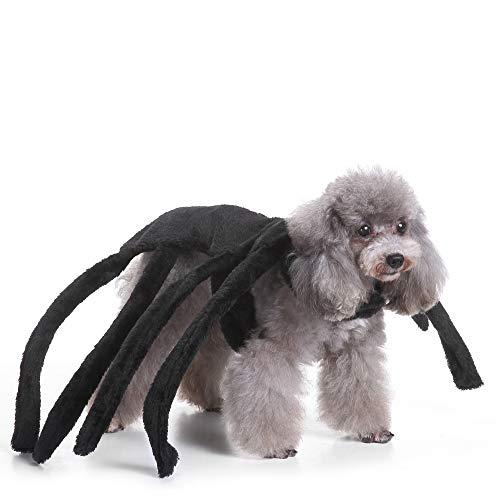 gray dog in Coppthinktu black spider harness