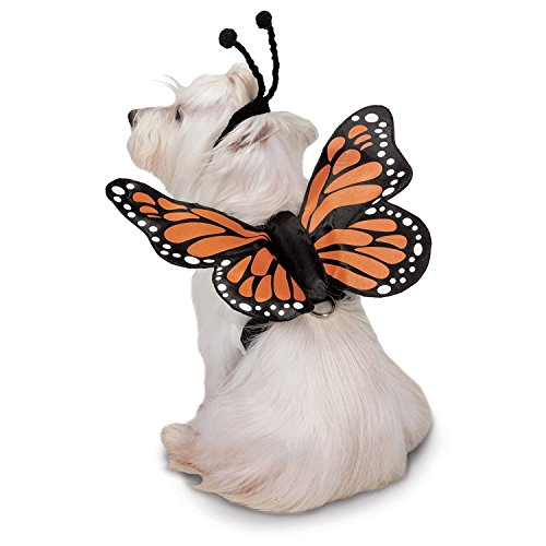 butterfly dog harness costume