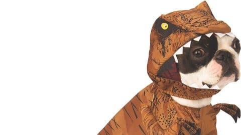 dog in T. Rex costume