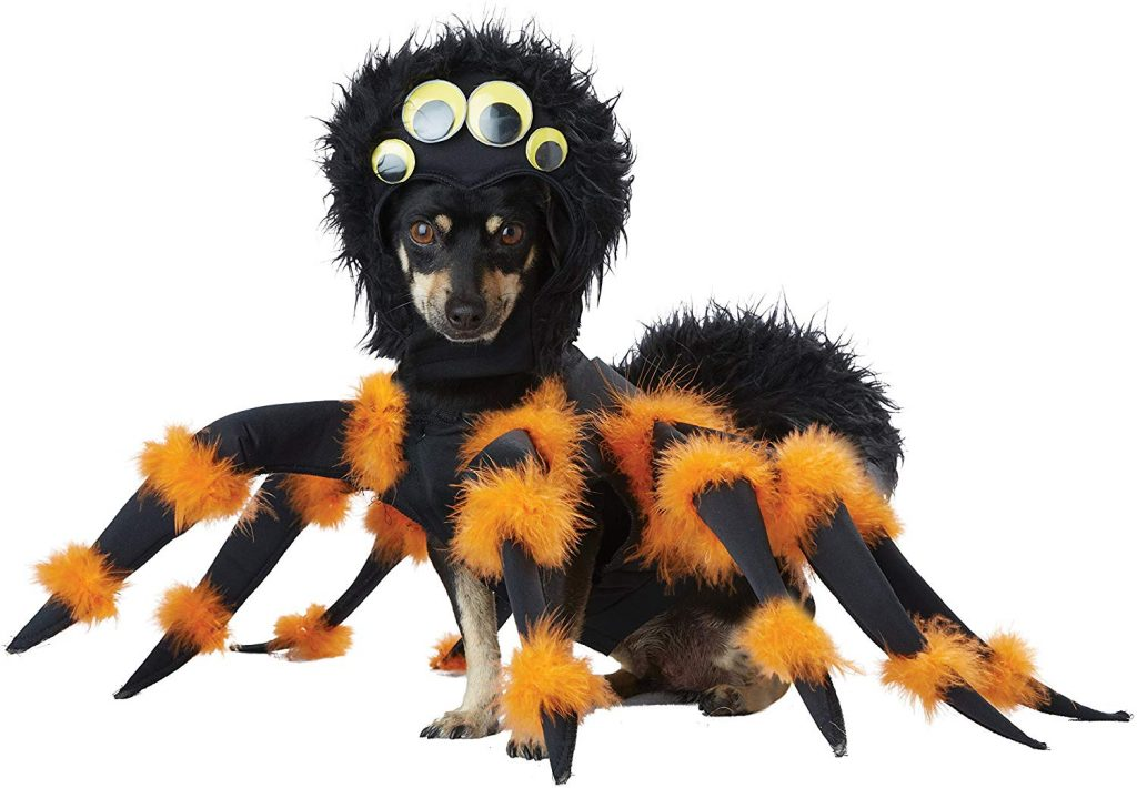 Spider Dog Costumes For