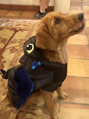 Dog in dragon costume