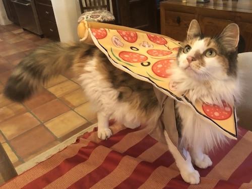 cat in a pizza costume