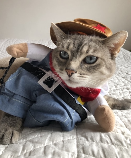 18 Halloween Cat Costume Reviews for 2019 Tested by Real