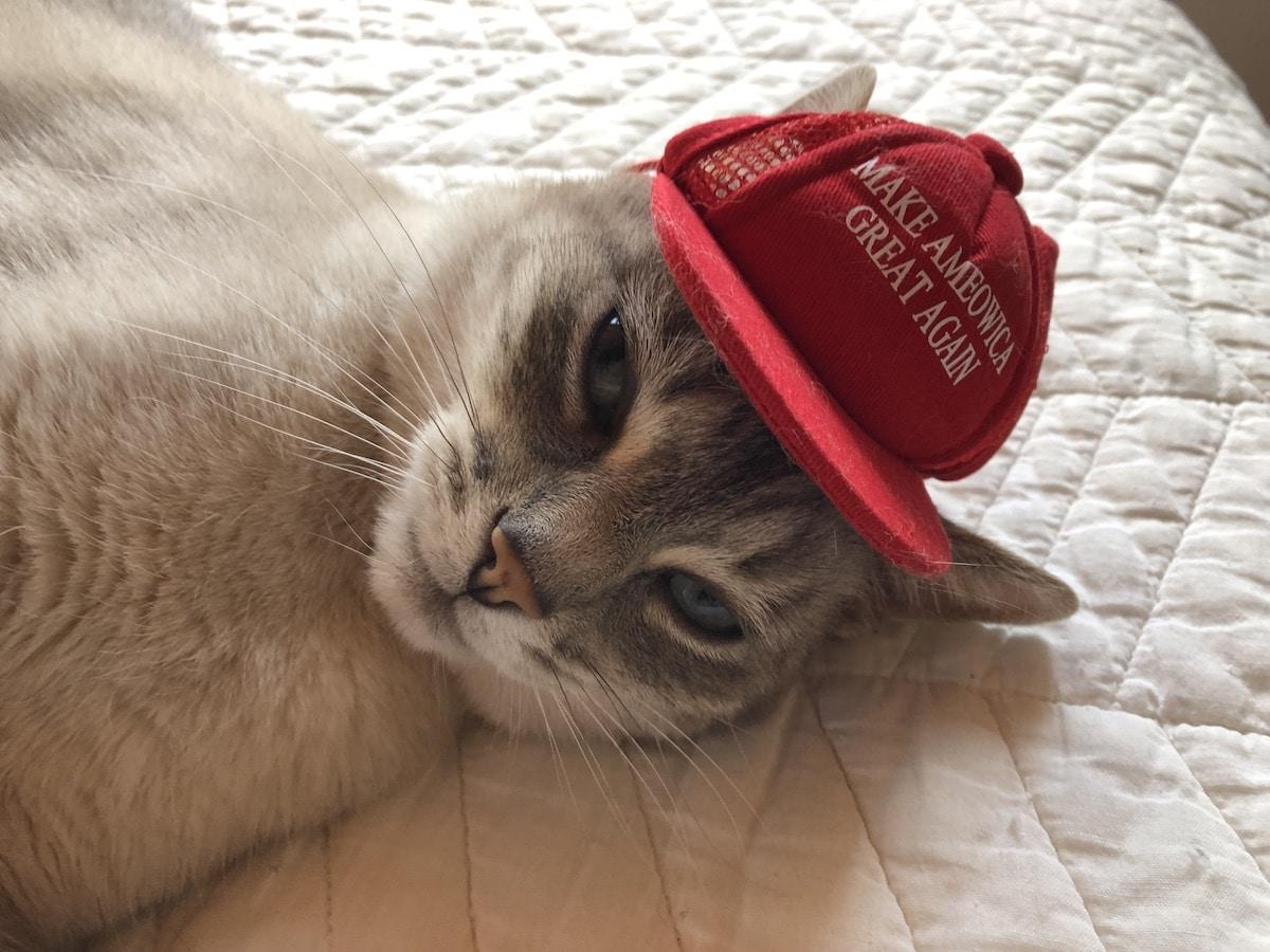 Cat in MAGA hat