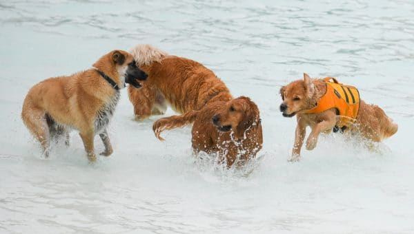 Here's What Happens When Dogs Take Over a Water Park: 21 Pictures of Pure Joy