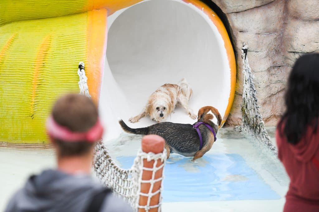 beagle swimming in a pool at a water park