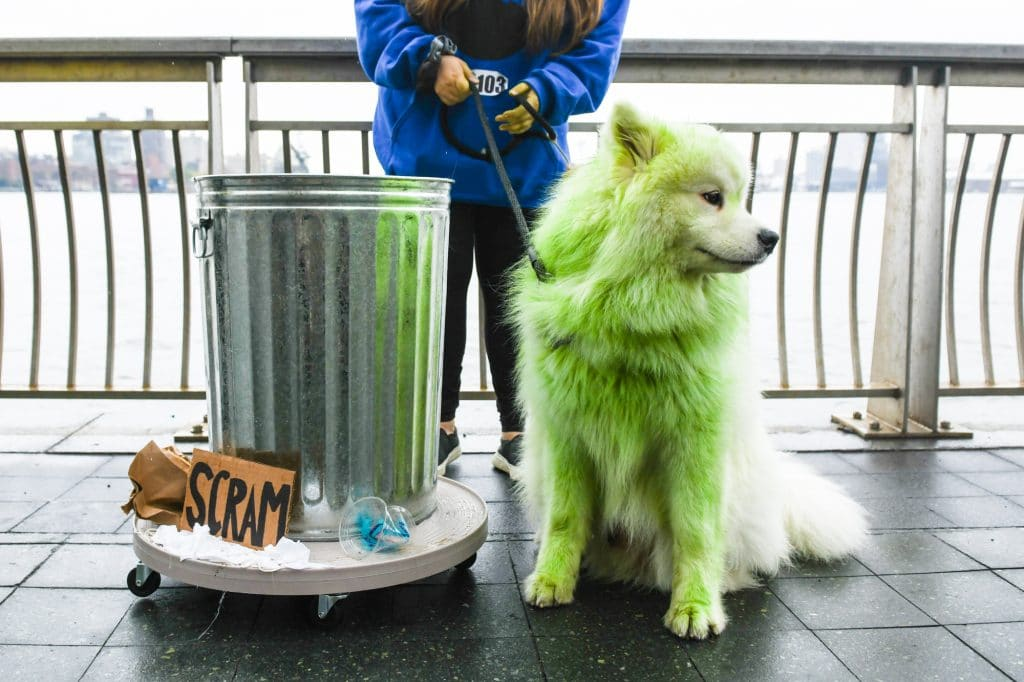 dog fur dye can be green like this for a Halloween look