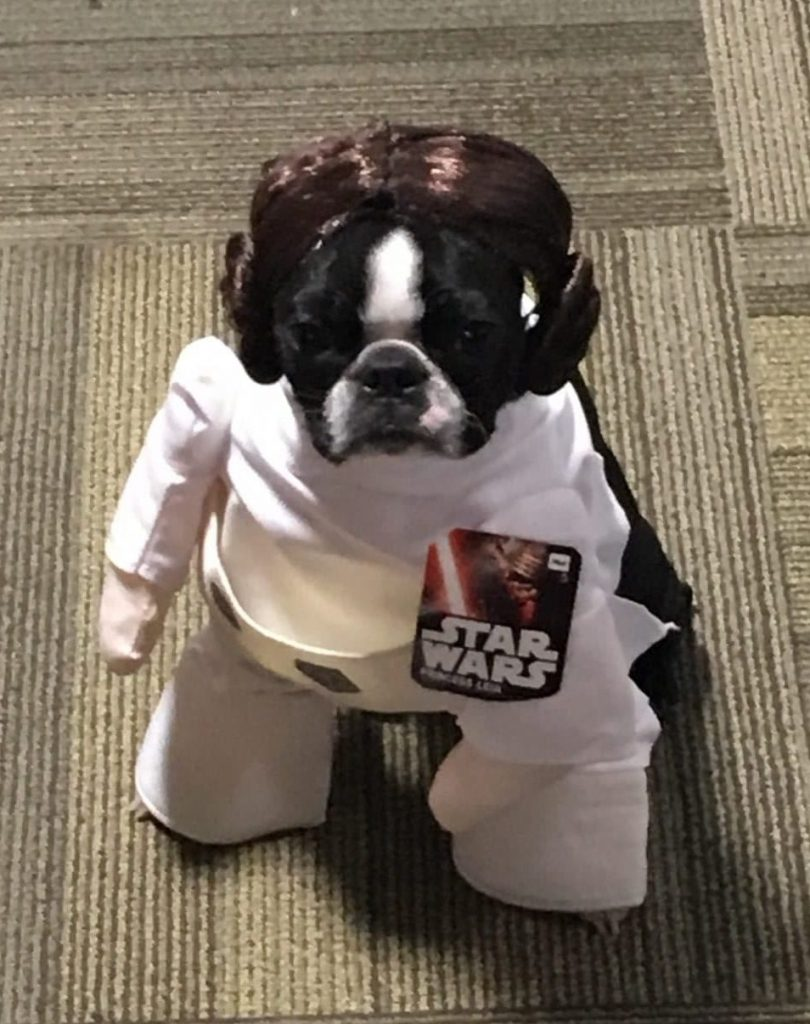 Princess Lea Dog Costume