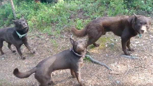 These Dogs Hold So Still You Won't Believe It's Real—Until They Hear the Signal [Video]