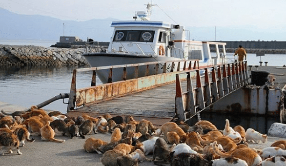 There's a Japanese Island With More Than 200 Cats (Yes, You Can Visit)