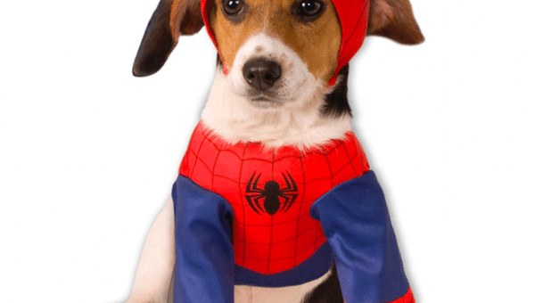 Top 17 Superhero Costumes For Dogs