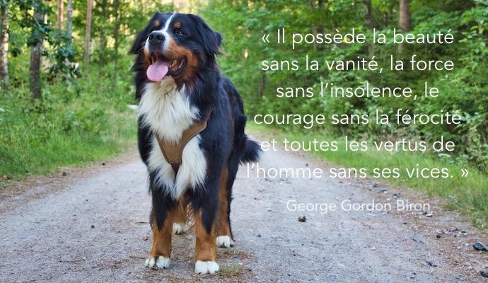 Belle citation canine