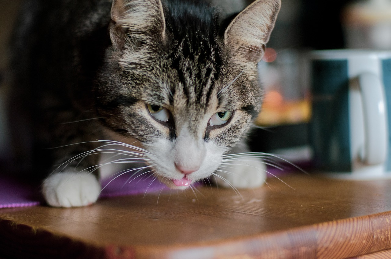 Can Cats Eat Yogurt What To Know If Your Cat Takes A Bite