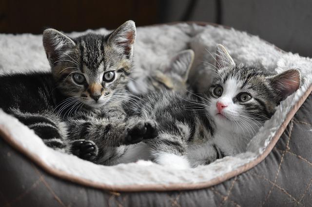 Kittens- Pixabay
