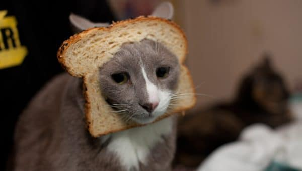 Why Is My Cat a Bread Bandit?