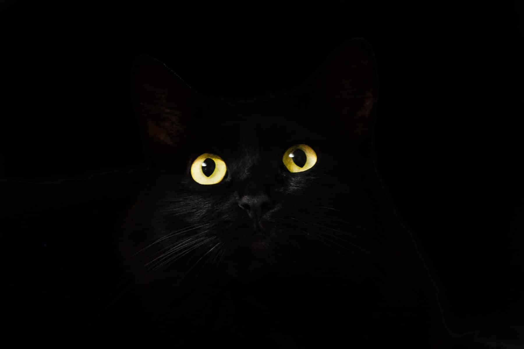 150 Halloween Names For Cats Movies Candies Seasonal More