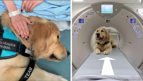 These Therapy Dogs Make Medical Treatment Way Less Scary for Kids