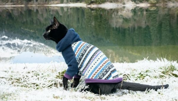 featured Etsy cat sweater