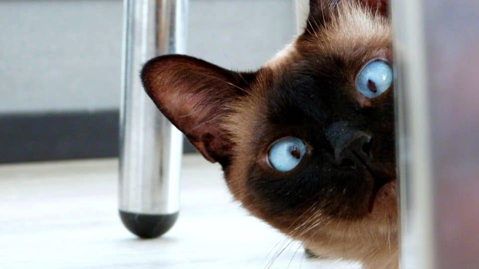 140 Pun Cat Names That Are Pawsitively Purrfect