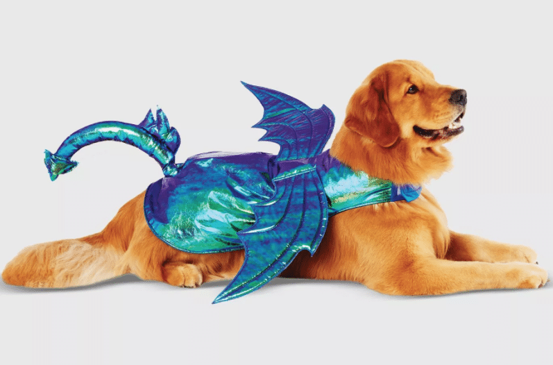 Golden Retriever wearing iridescent blue and green dragon costume